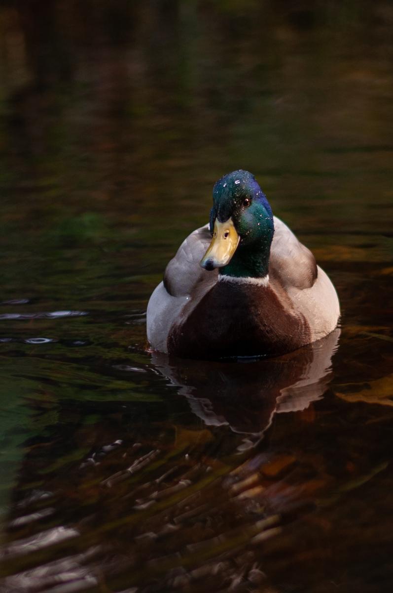anja-blaksmark-fugle-and