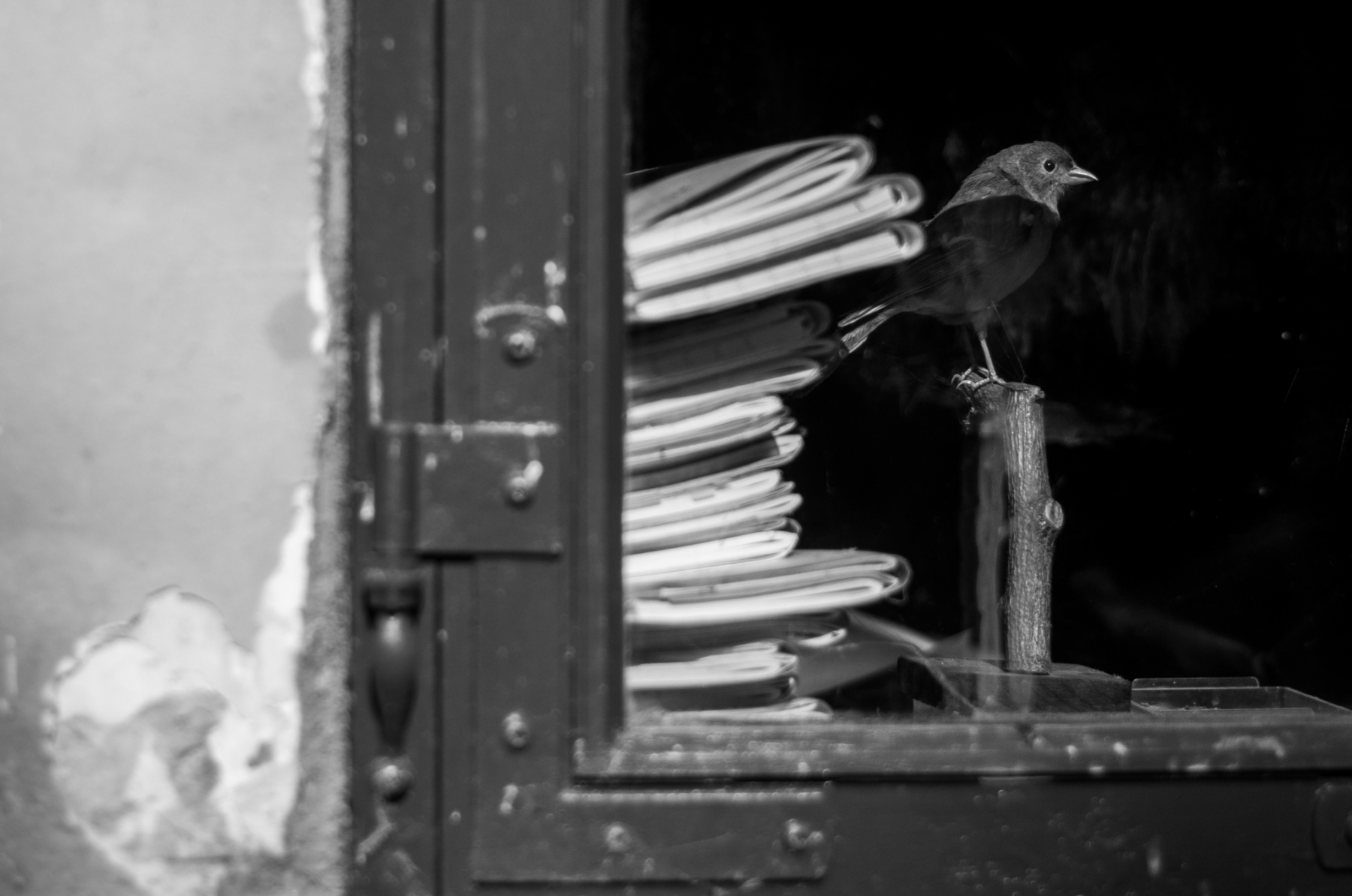 anja-blaksmark-udstoppet-bogfinkehan