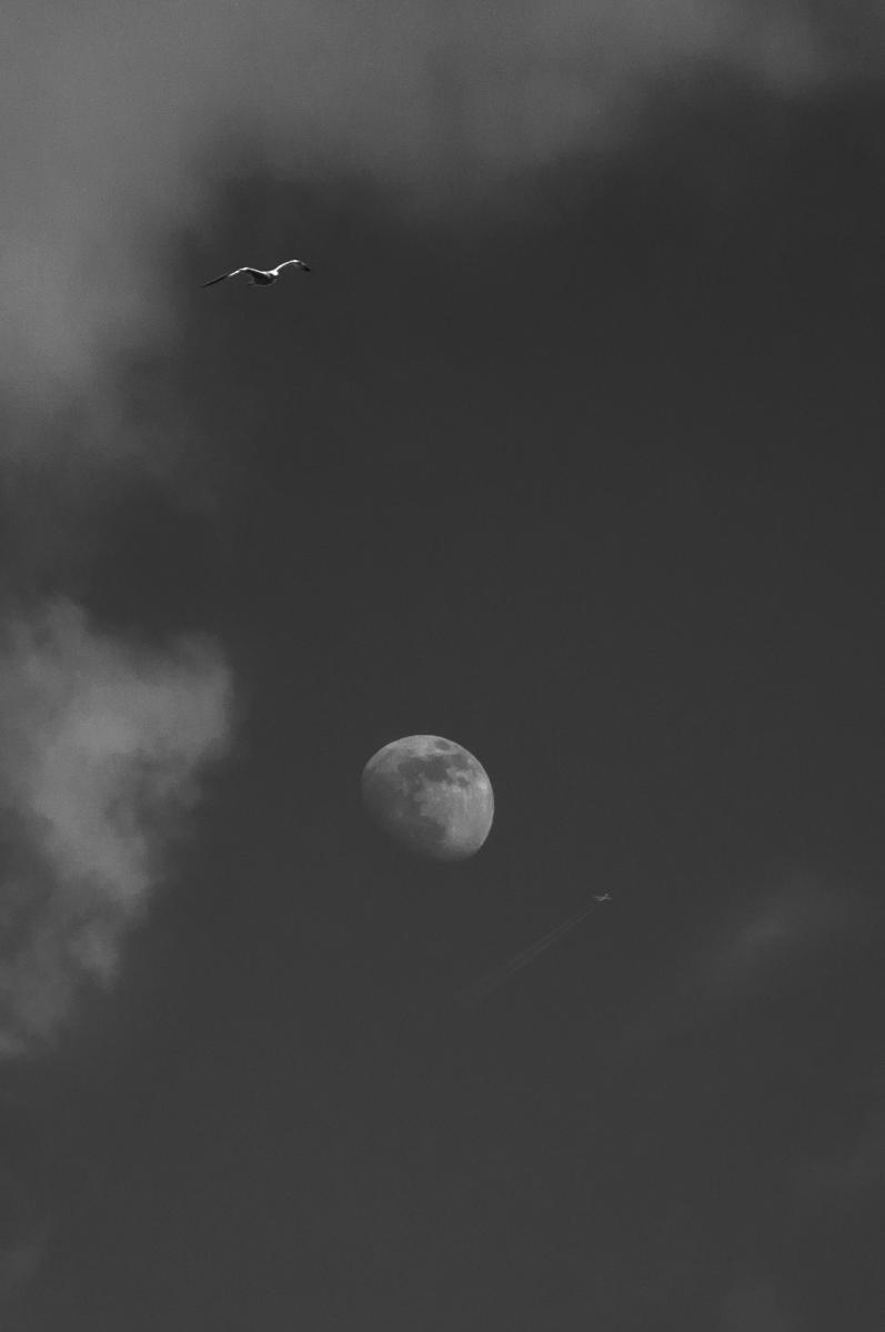 anja-blaksmark-månen-fuglen-flyveren