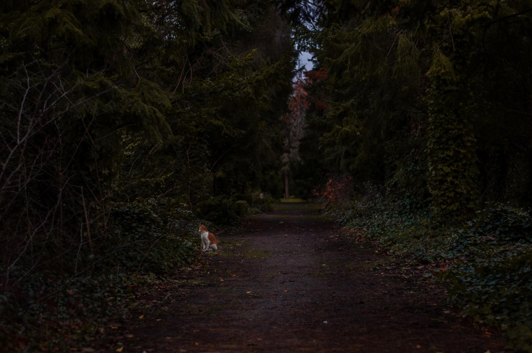 anja-blaksmark-vestre-kirkegård-kat